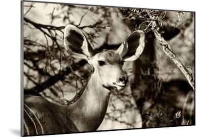 Awesome South Africa Collection B&W - Portrait of Nyala Antelope-Philippe Hugonnard-Mounted Photographic Print