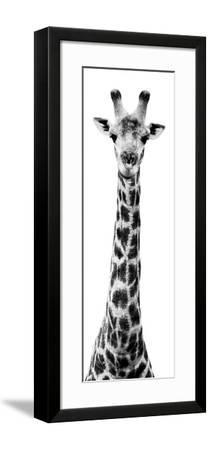 Safari Profile Collection - Giraffe White Edition X-Philippe Hugonnard-Framed Photographic Print