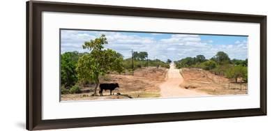 Awesome South Africa Collection Panoramic - Road in the Savannah-Philippe Hugonnard-Framed Photographic Print