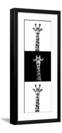 Safari Profile Collection - Giraffes IV-Philippe Hugonnard-Framed Photographic Print