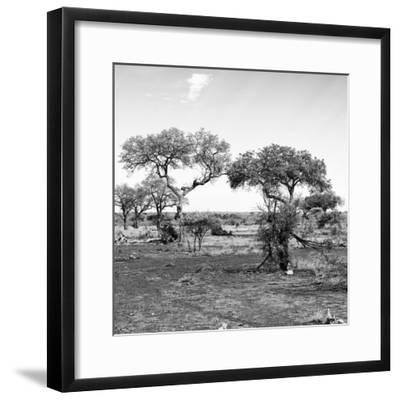Awesome South Africa Collection Square - African Landscape with Acacia Trees B&W-Philippe Hugonnard-Framed Photographic Print