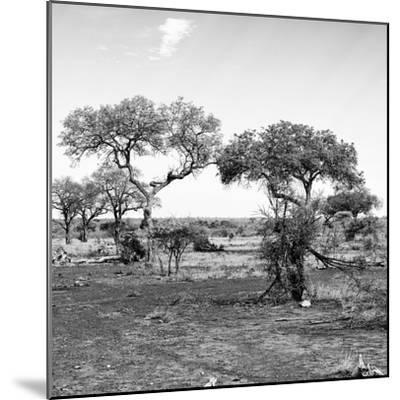 Awesome South Africa Collection Square - African Landscape with Acacia Trees B&W-Philippe Hugonnard-Mounted Photographic Print