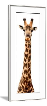 Safari Profile Collection - Giraffe White Edition IX-Philippe Hugonnard-Framed Photographic Print