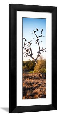 Awesome South Africa Collection Panoramic - Cape Vulture on a Tree at Sunrise-Philippe Hugonnard-Framed Photographic Print