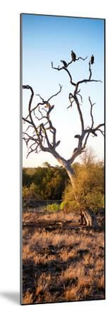 Awesome South Africa Collection Panoramic - Cape Vulture on a Tree at Sunrise-Philippe Hugonnard-Mounted Photographic Print