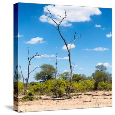 Awesome South Africa Collection Square - Savannah Landscape IV-Philippe Hugonnard-Stretched Canvas Print