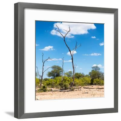 Awesome South Africa Collection Square - Savannah Landscape IV-Philippe Hugonnard-Framed Photographic Print