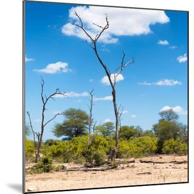 Awesome South Africa Collection Square - Savannah Landscape IV-Philippe Hugonnard-Mounted Photographic Print
