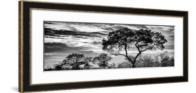 Awesome South Africa Collection Panoramic - Tree Silhouetted at Sunset B&W-Philippe Hugonnard-Framed Photographic Print