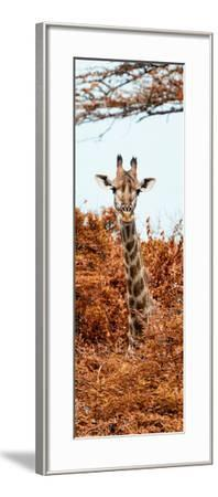 Awesome South Africa Collection Panoramic - Curious Giraffe with Red Savanna II-Philippe Hugonnard-Framed Photographic Print
