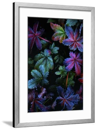 Frosty Fall-Darren White Photography-Framed Photographic Print