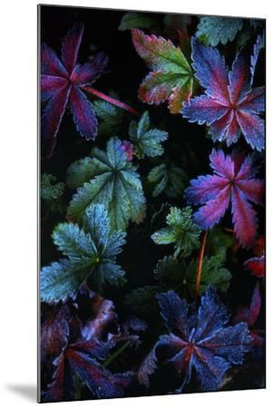 Frosty Fall-Darren White Photography-Mounted Photographic Print