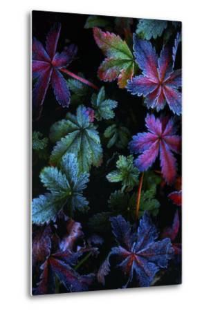 Frosty Fall-Darren White Photography-Metal Print