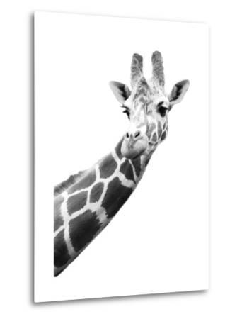 Giraffe--Metal Print