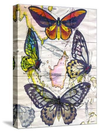 Butterfly Map IV-John Butler-Stretched Canvas Print