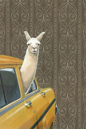 Taxi Llama-Jason Ratliff-Stretched Canvas Print