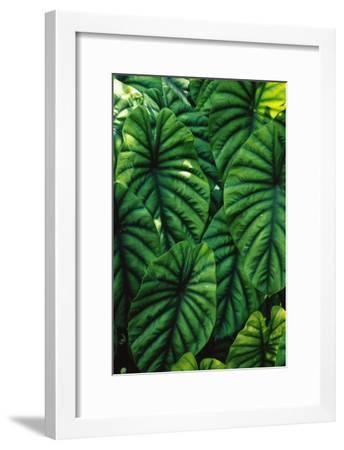 Green Tropical Leaves-Darrell Gulin-Framed Art Print