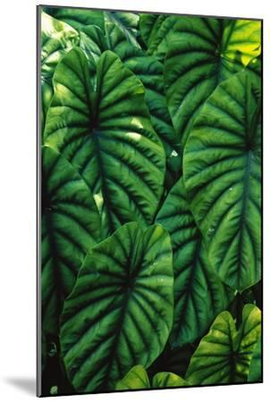Green Tropical Leaves-Darrell Gulin-Mounted Art Print