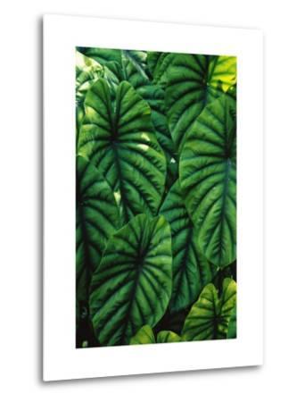 Green Tropical Leaves-Darrell Gulin-Metal Print