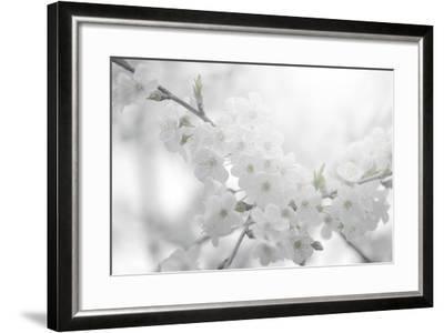 Cherry Tree-Philippe Sainte-Laudy-Framed Photographic Print