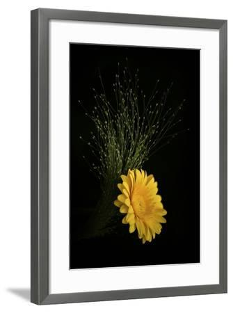 Gold Button-Philippe Sainte-Laudy-Framed Photographic Print