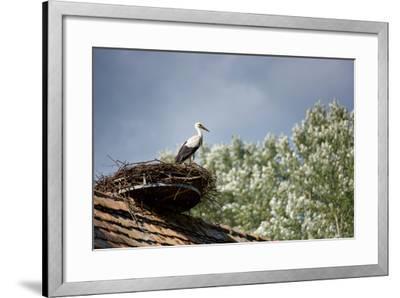 Hesitation-Philippe Sainte-Laudy-Framed Photographic Print