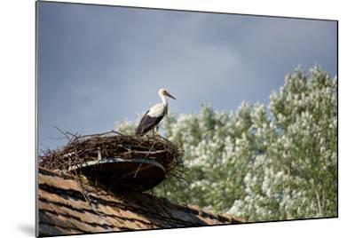 Hesitation-Philippe Sainte-Laudy-Mounted Photographic Print