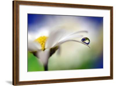 Intens Summer Drop II-Heidi Westum-Framed Photographic Print
