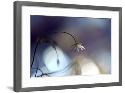 Good Night-Heidi Westum-Framed Photographic Print