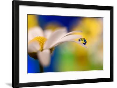 Intens Summer Drop-Heidi Westum-Framed Photographic Print