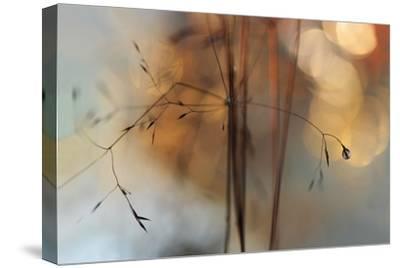 Single Drop Fall-Heidi Westum-Stretched Canvas Print