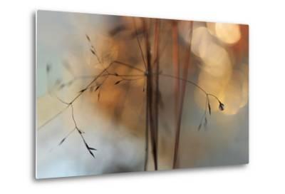 Single Drop Fall-Heidi Westum-Metal Print