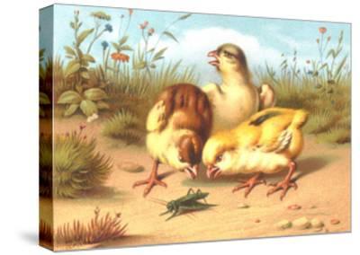 Pesky Chicks with Grasshopper--Stretched Canvas Print