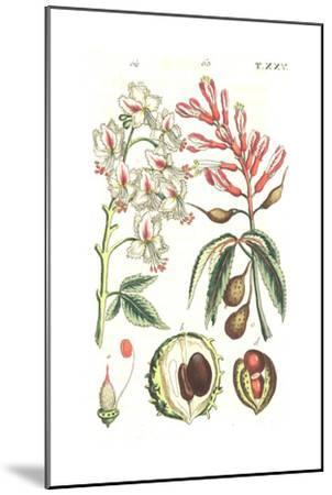 Botanical Illustrations of Flowering Plants--Mounted Art Print