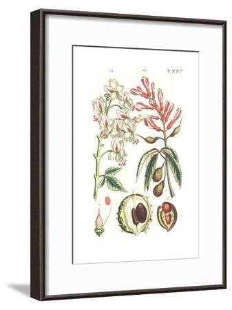 Botanical Illustrations of Flowering Plants--Framed Art Print