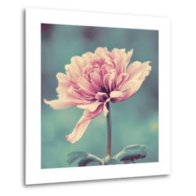 Gorgeous Pink-Gail Peck-Metal Print