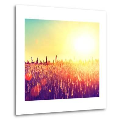 Field, Beautiful Nature Sunset Landscape-Subbotina Anna-Metal Print