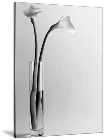 Calla Lilies in Vase-Howard Sokol-Stretched Canvas Print