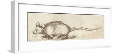 Mouse, C. 1480-1520-Albrecht Durer-Framed Giclee Print
