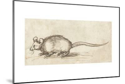Mouse, C. 1480-1520-Albrecht Durer-Mounted Giclee Print