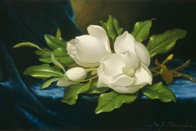 Giant Magnolias on a Blue Velvet Cloth, 1890-Martin Johnson Heade-Stretched Canvas Print