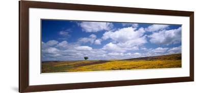 Wildflowers in Bloom, Table Mountain, Oroville, California, USA--Framed Photographic Print