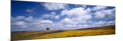 Wildflowers in Bloom, Table Mountain, Oroville, California, USA--Mounted Photographic Print