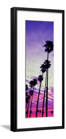 Silhouette of Palm Trees at Sunrise, Santa Barbara, California, USA--Framed Photographic Print