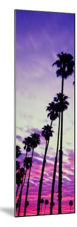 Silhouette of Palm Trees at Sunrise, Santa Barbara, California, USA--Mounted Photographic Print
