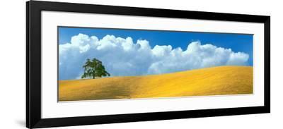Lone Oak Tree over Grass at Hillside, Paso Robles, San Luis Obispo County, California, USA--Framed Photographic Print
