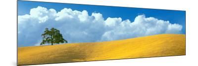 Lone Oak Tree over Grass at Hillside, Paso Robles, San Luis Obispo County, California, USA--Mounted Photographic Print