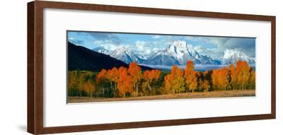 Trees in a Forest with Snowcapped Mountain Range in the Background, Teton Range, Oxbow Bend--Framed Photographic Print