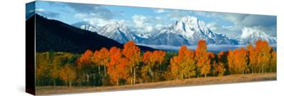 Trees in a Forest with Snowcapped Mountain Range in the Background, Teton Range, Oxbow Bend--Stretched Canvas Print