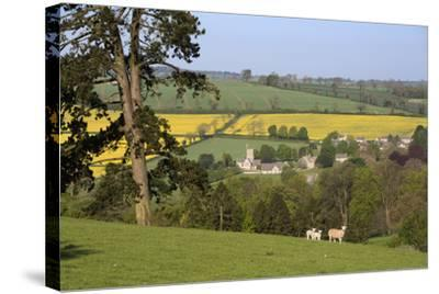 Oilseed Rape Fields and Sheep Above Cotswold Village, Guiting Power, Cotswolds-Stuart Black-Stretched Canvas Print